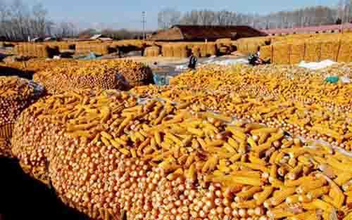 农产品期货行情:小麦即将收获加速美豆播种