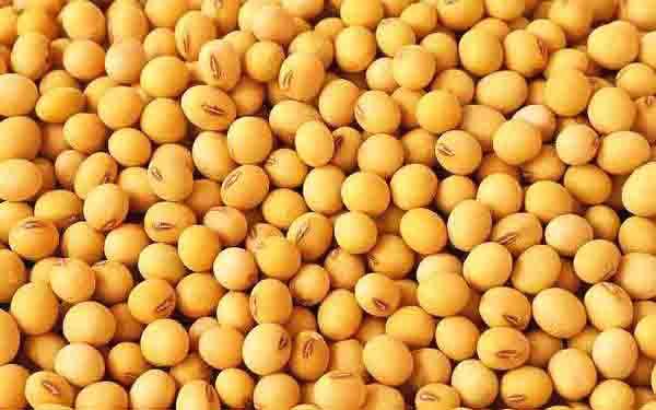 大豆供需今年有望平稳