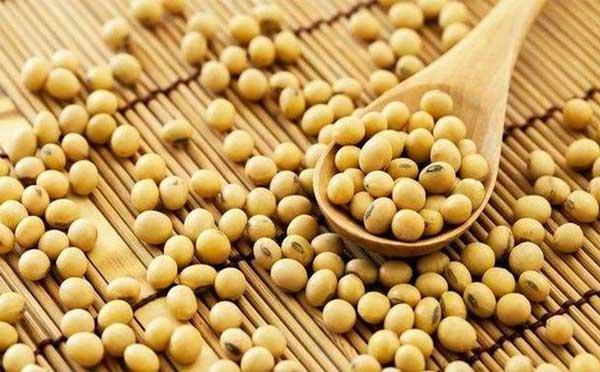 豆粕期货行情