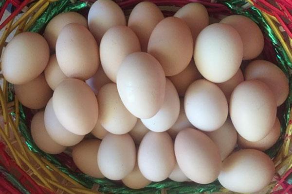 鸡蛋期货行情