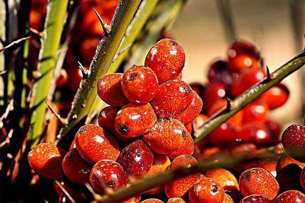 棕榈油期货行情