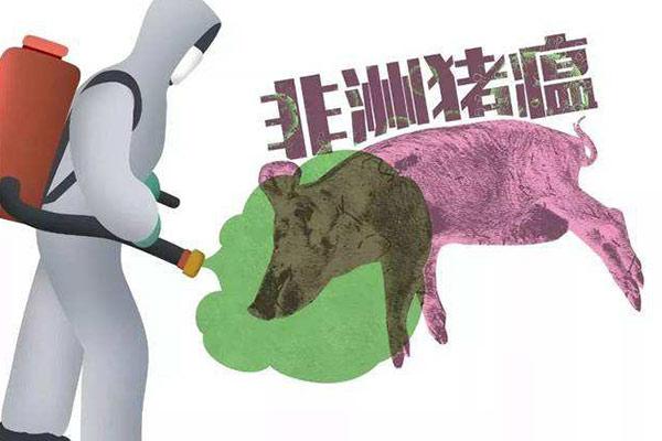 非洲猪瘟影响