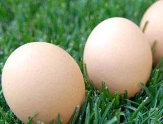 鸡蛋期货反弹,能否继续突破?