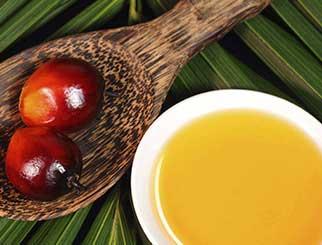 棕榈油反弹受阻,预计底部震荡