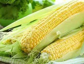玉米期货反弹上涨,预计难以维持