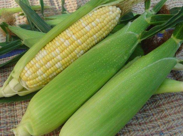 玉米期货行情:国际玉米期货连续两日下跌