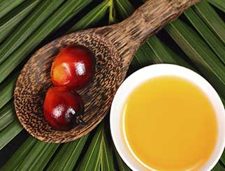 厄尔尼诺到来 棕榈油期货如何发展