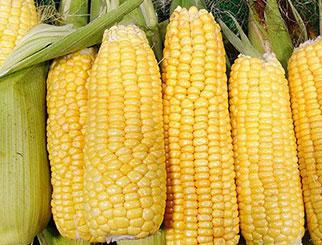 玉米期货开户流程 商品期货开户最低要求