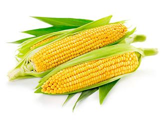 强降水影响玉米价格 后期需持续关注