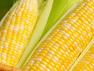 玉米期货手续费来回都要收吗 期货手续费入门