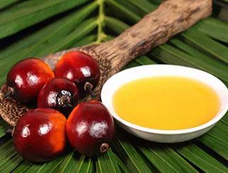 棕榈油期价或将大幅上涨
