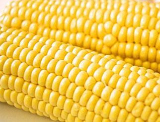 期货市场涨跌互现 玉米期货止跌反弹