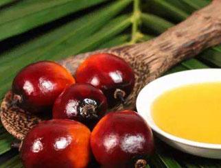 棕榈油期货再次大涨触及涨停 半月涨幅超过10%