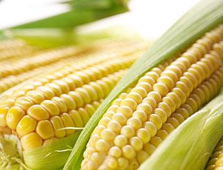 玉米期货和国外期货有关联吗 玉米会大幅跳空吗