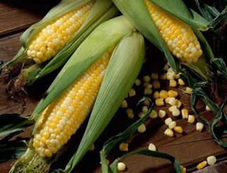 玉米期货要多少钱 期货玉米手续费是多少