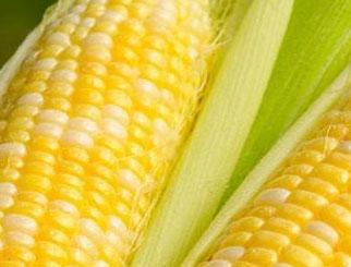 期货玉米是什么玉米 玉米期货是T+0交易模式吗