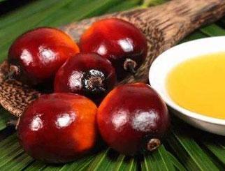 棕榈油涨幅领先 后市可能没有更多利空因素